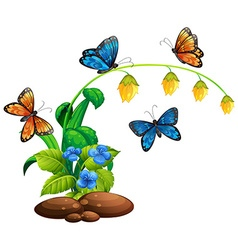 Butterflies flying around the plant vector