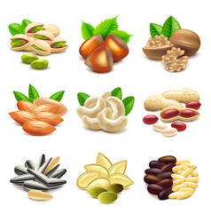 Nuts icons set vector image vector image