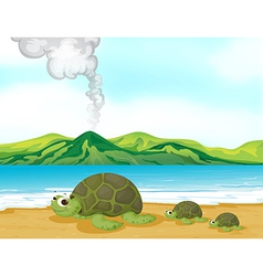 Cartoon beach turtles vector