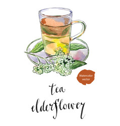 elderflower sambucus nigra tea in glass mug vector image vector image
