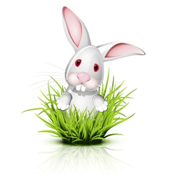 little rabbit grass vector image