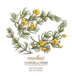 rooibos set vector image