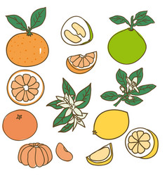 Colored drawing organic food collection vector