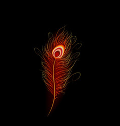 Peacock feather with black background vector image