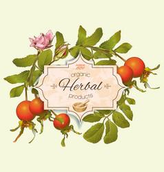 Vintage rosehip banner vector