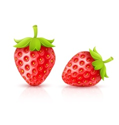 Strawberry red ripe fruits vector image vector image