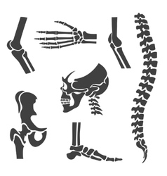 Human joints set orthopedic and spine vector