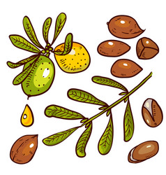 set of argan oil vector image
