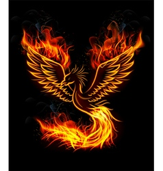 Fire burning phoenix bird with black background vector