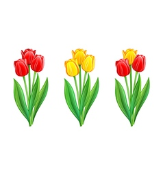 Bouquets of red and yellow tulips vector