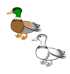 A duck isolated on a white background vector image