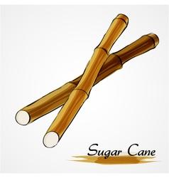 sugar cane vector image