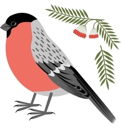 A bullfinch vector