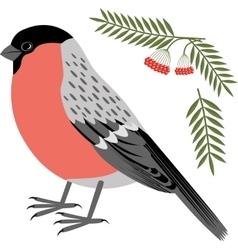 a bullfinch vector image vector image