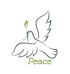 Dove of peace with green olive vector image