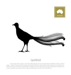 Black silhouette of lyrebird animals of australia vector