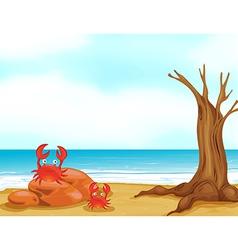 Seaside Crab vector image vector image
