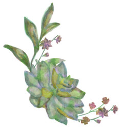 Drawn watercolor succulent flower vector