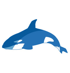 Killer whale cetacea animal aquatic animals orca vector