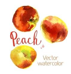 Kitchen garden vector image vector image