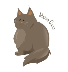 Maine Coon isolated on white background vector image vector image