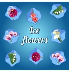 Beautiful flowers frozen in ice cubes vector