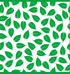 Green leaves on white background vector