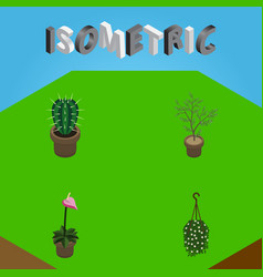Isometric plant set of peyote grower fern and vector
