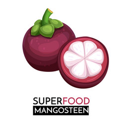 Mangosteen icon vector
