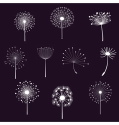 Floral elements with dandelions vector image