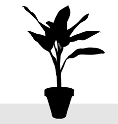 Dumb cane silhouette vector