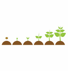 Evolution young plant vector