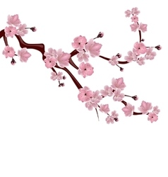 Japanese cherry tree A branch of pink cherry vector image vector image