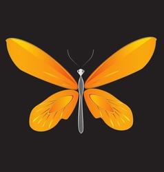Orange bird wings butterfly vector