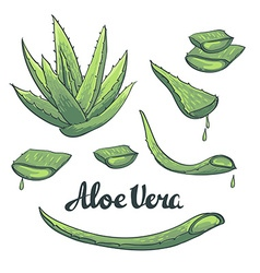 Aloe vera hand drawn set vector