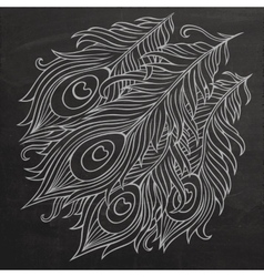 Peacock feathers chalkboard vector
