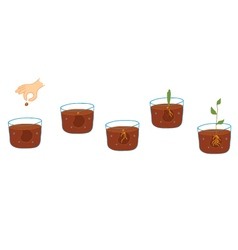 Growing plant process vector