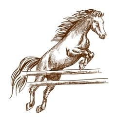 Wild horse jumping high over barrier vector image