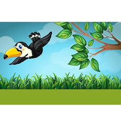 Scene with toucan flying in the field vector