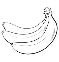 Bunch of three unopened unpeeled ripe bananas vector