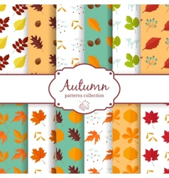 Autumn seamles backgrounds set vector