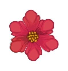 Red chinese rose with oval shaped petals vector