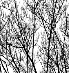 Tree Twigs Silhouette vector image vector image