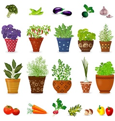 collection of different herbs in art floral pots vector image