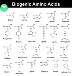 Biogenic amino acids vector image vector image