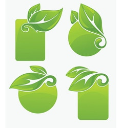 green frames vector image
