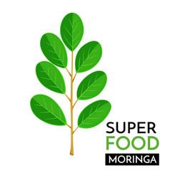 moringa icon vector image vector image