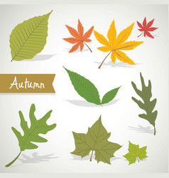 set of colorful autumn leaves nature vector image