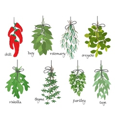 Bunches of medicinal aromatic herbs vector image