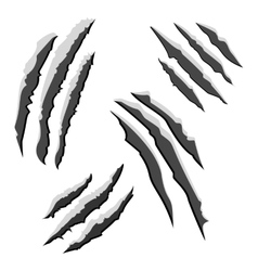 Set of black claw scratches isolated on white vector image